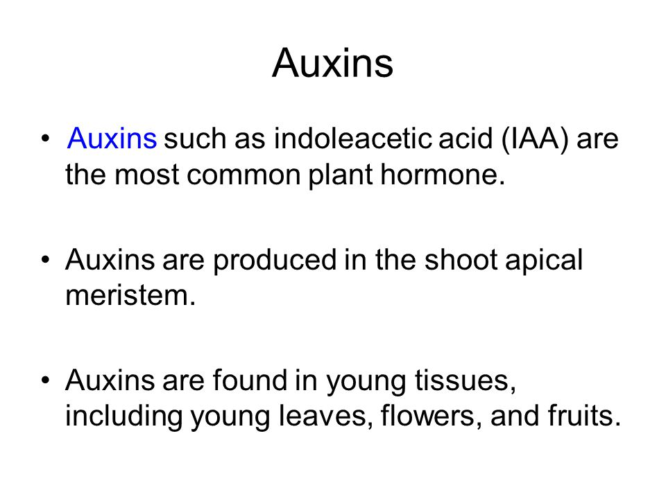 Auxins • Auxins such as indoleacetic acid (IAA) are the most common plant hormone. Auxins are produced in the shoot apical meristem.