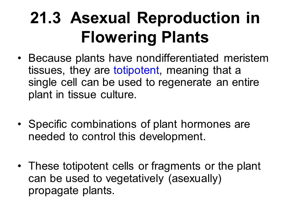 21.3 Asexual Reproduction in Flowering Plants