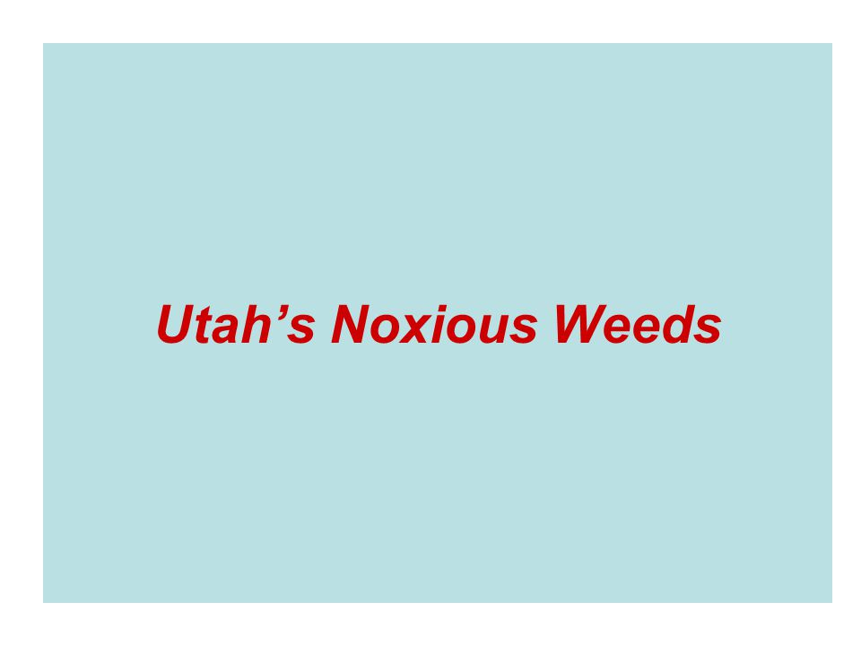 Utah's Noxious Weeds
