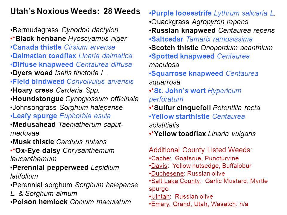 Utah's Noxious Weeds: 28 Weeds