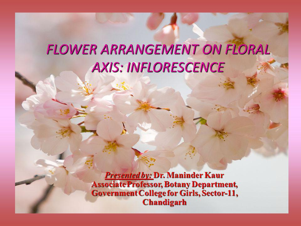 FLOWER ARRANGEMENT ON FLORAL AXIS: INFLORESCENCE