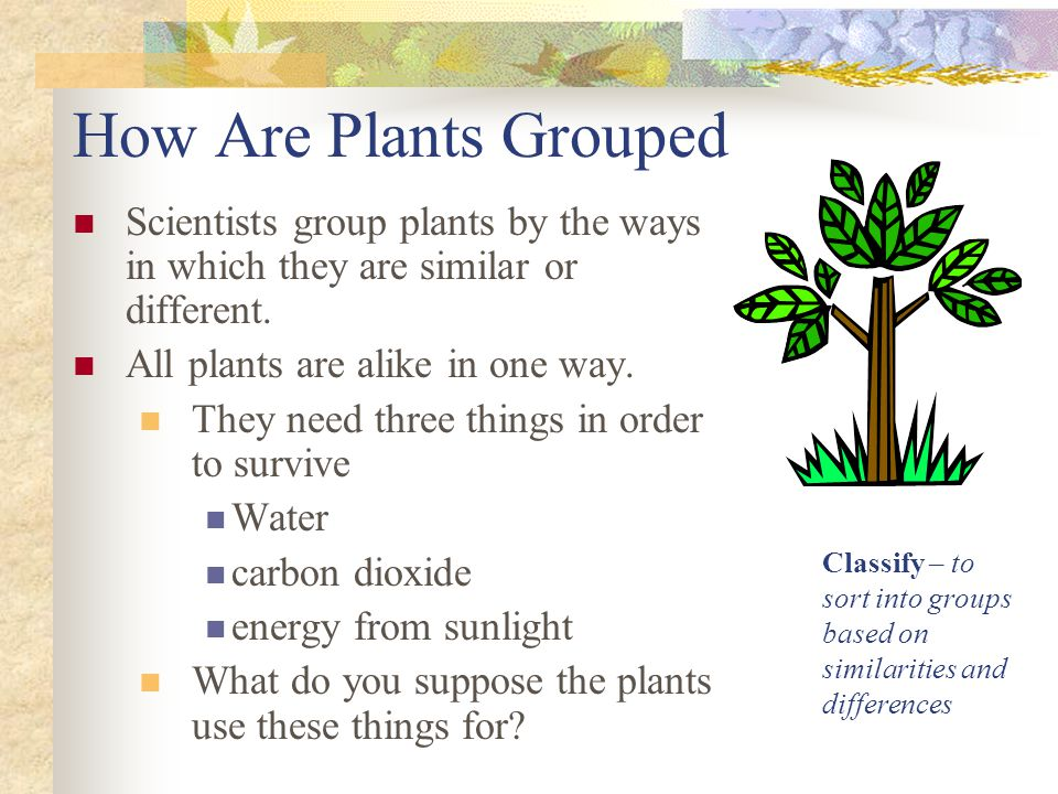 How Are Plants Grouped Scientists group plants by the ways in which they are similar or different. All plants are alike in one way.