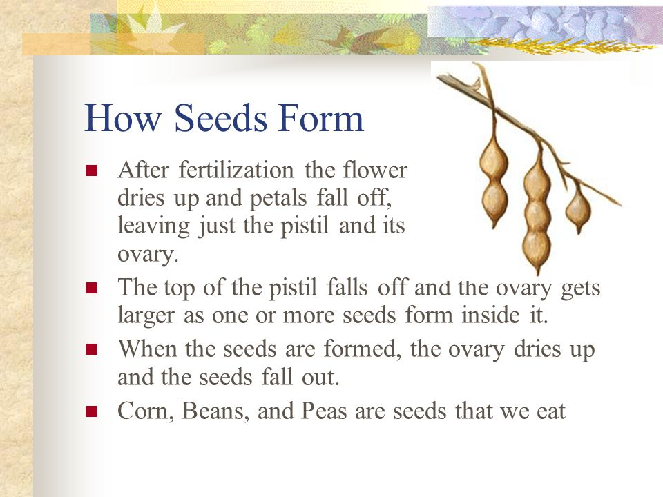 How Seeds Form