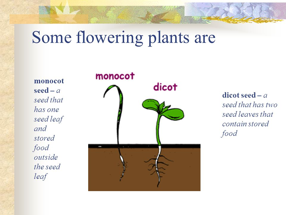 Some flowering plants are