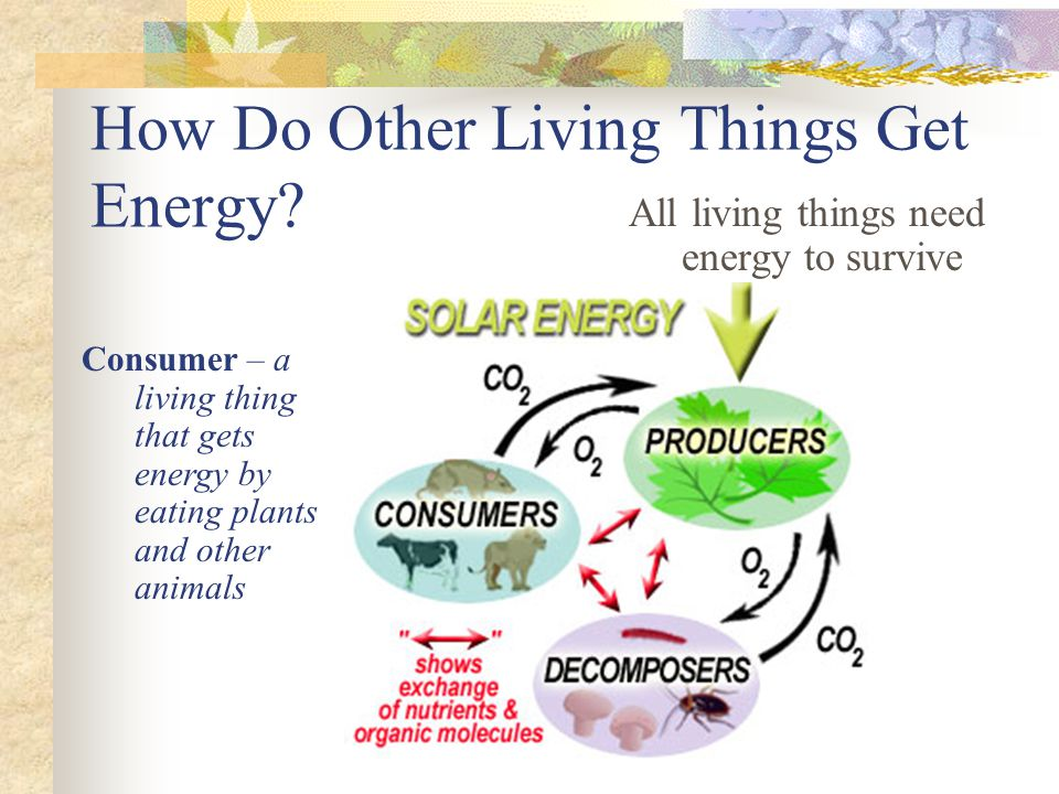 How Do Other Living Things Get Energy