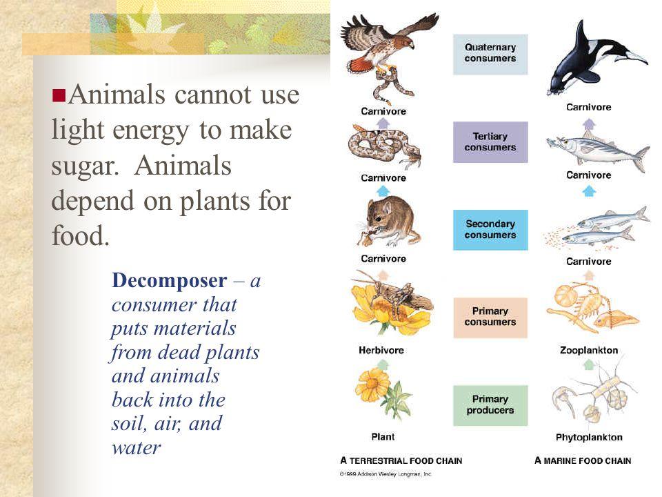 Animals cannot use light energy to make sugar
