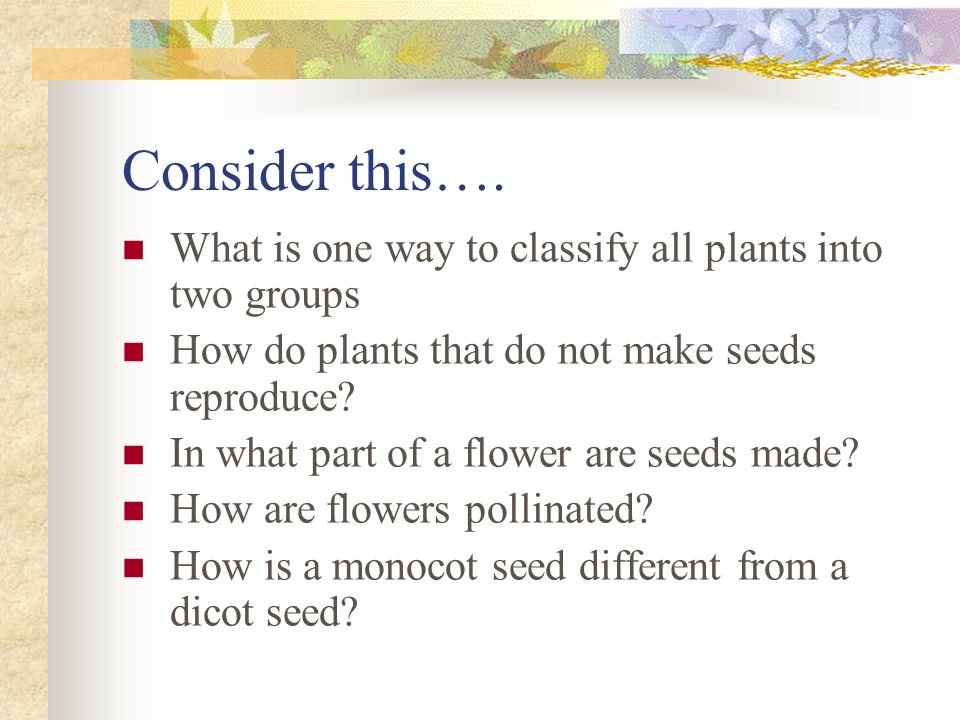 Consider this…. What is one way to classify all plants into two groups