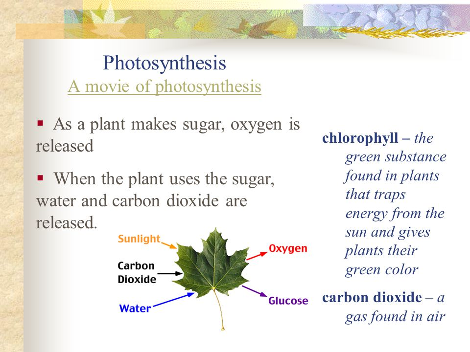 Photosynthesis A movie of photosynthesis