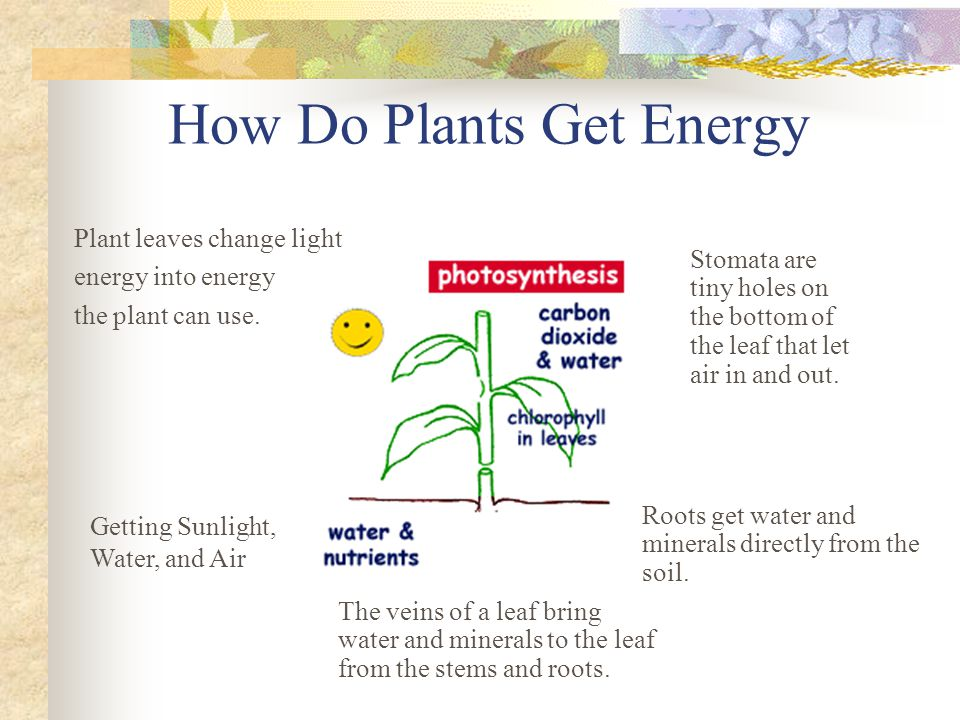 How Do Plants Get Energy