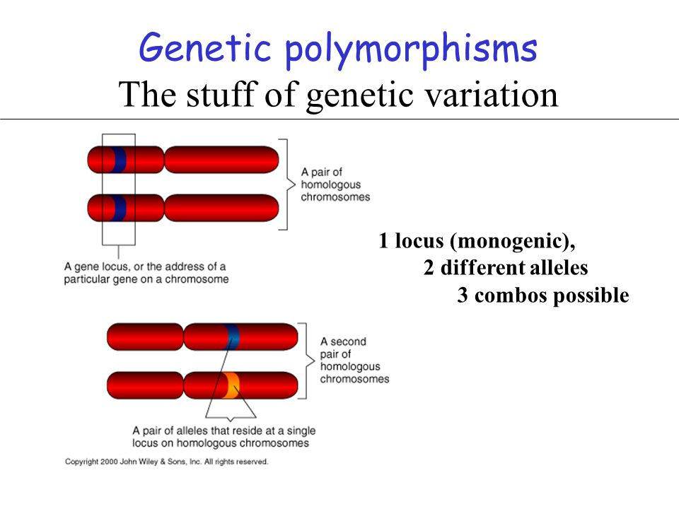 Genetic polymorphisms The stuff of genetic variation