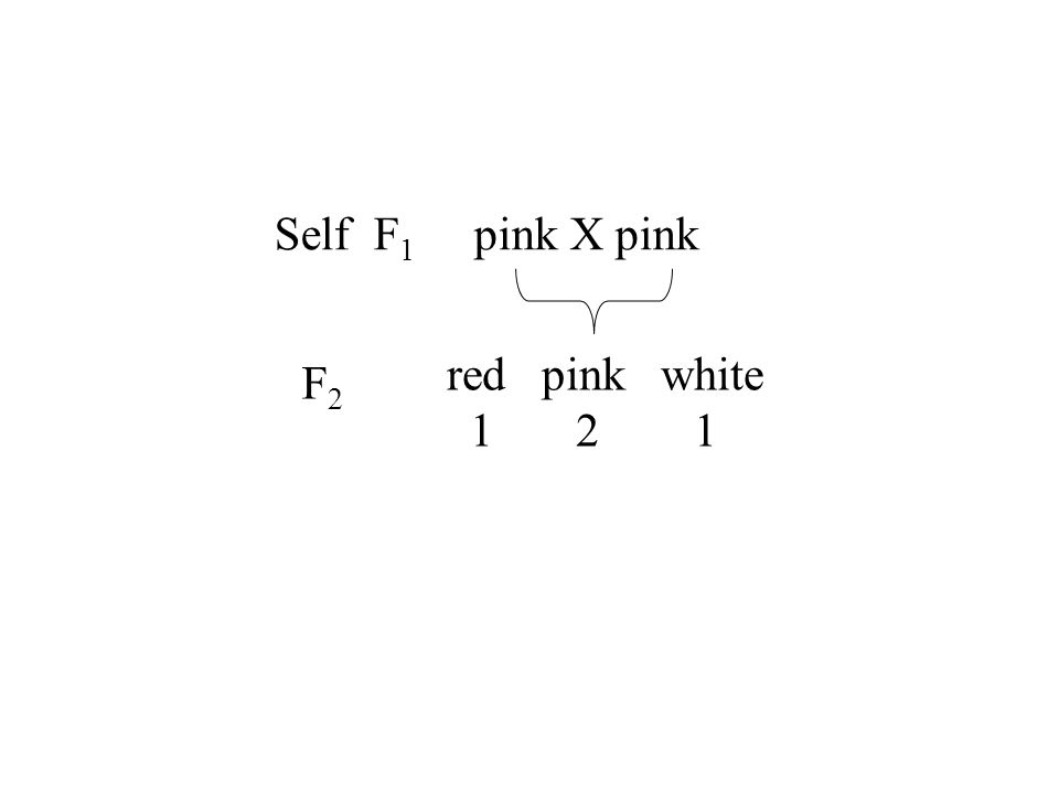 Self F1 pink X pink red pink white 1 2 1 F2