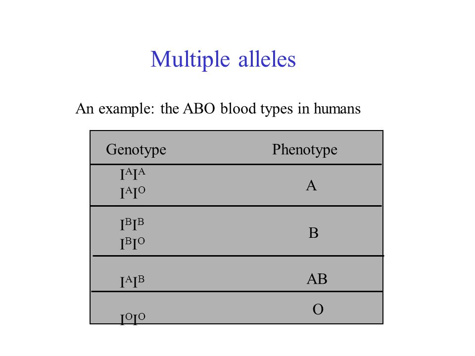 Multiple alleles An example: the ABO blood types in humans