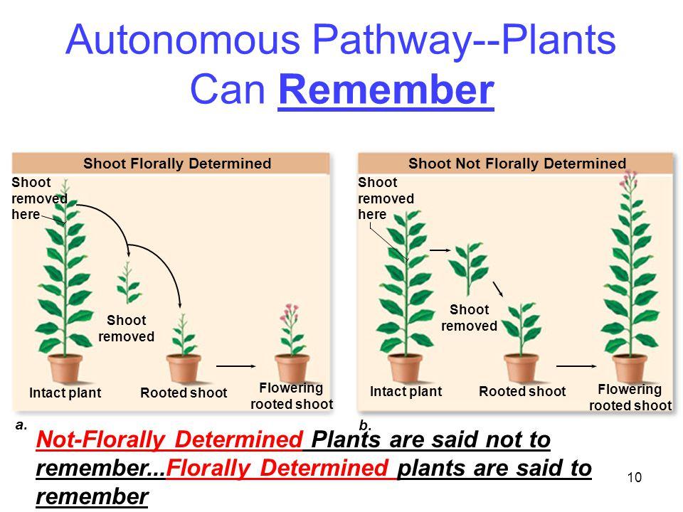 Autonomous Pathway--Plants Can Remember