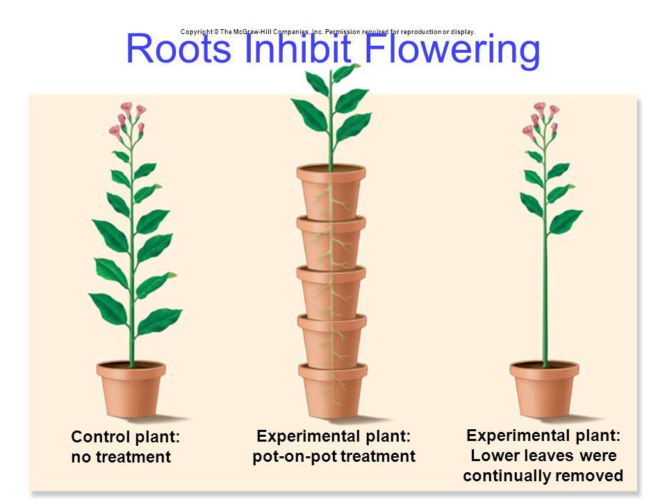 Roots Inhibit Flowering