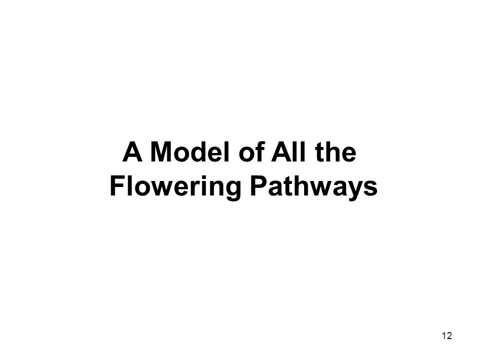 A Model of All the Flowering Pathways