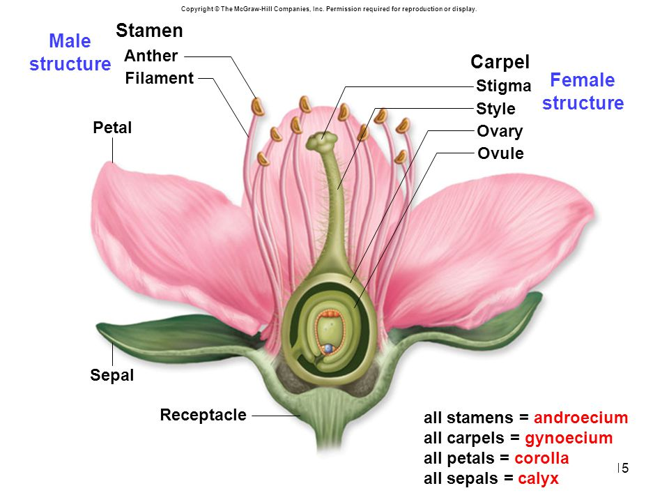 Male structure Female structure