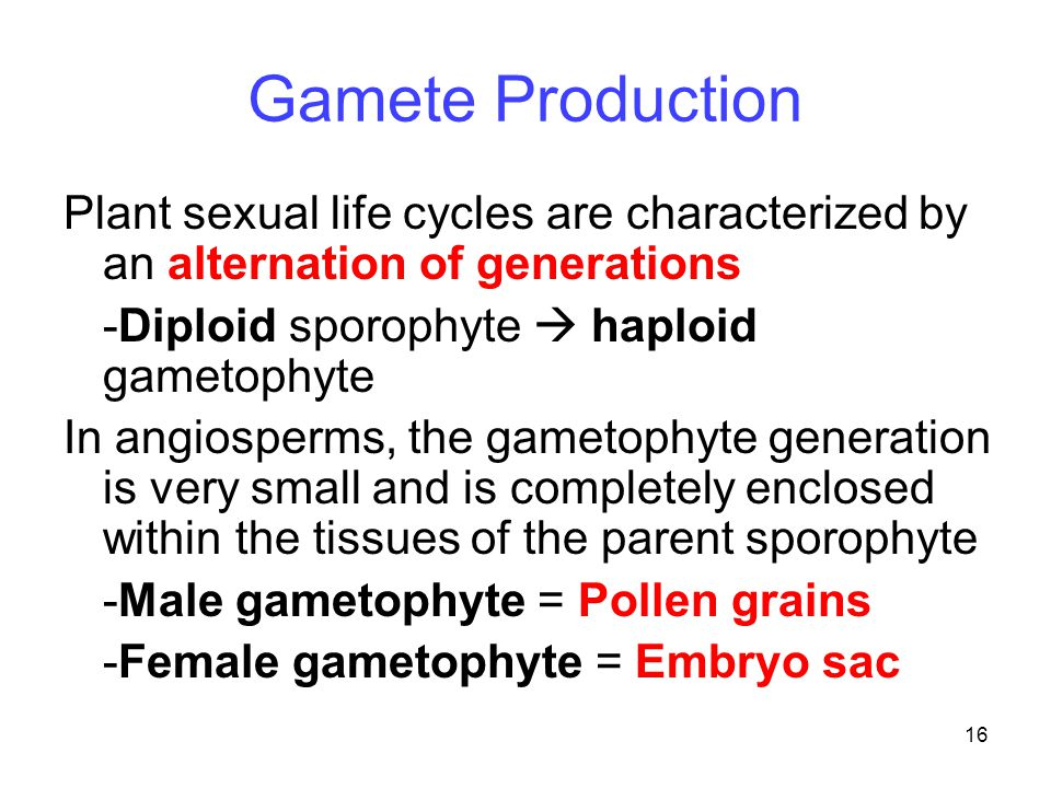Gamete Production Plant sexual life cycles are characterized by an alternation of generations. -Diploid sporophyte  haploid gametophyte.