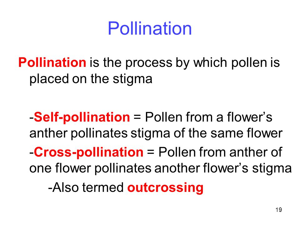 Pollination Pollination is the process by which pollen is placed on the stigma.