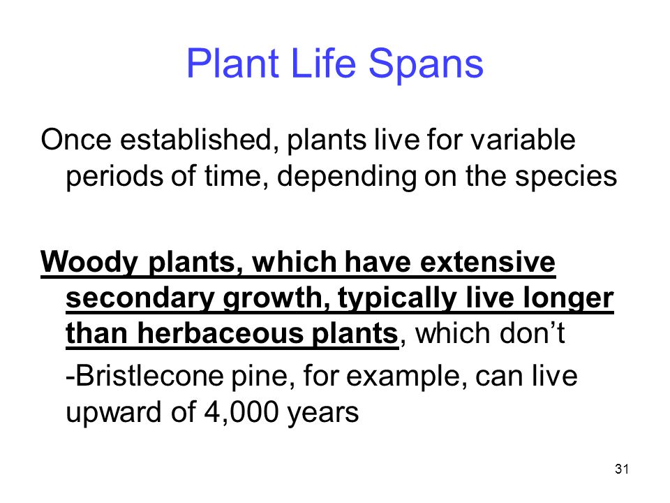Plant Life Spans Once established, plants live for variable periods of time, depending on the species.