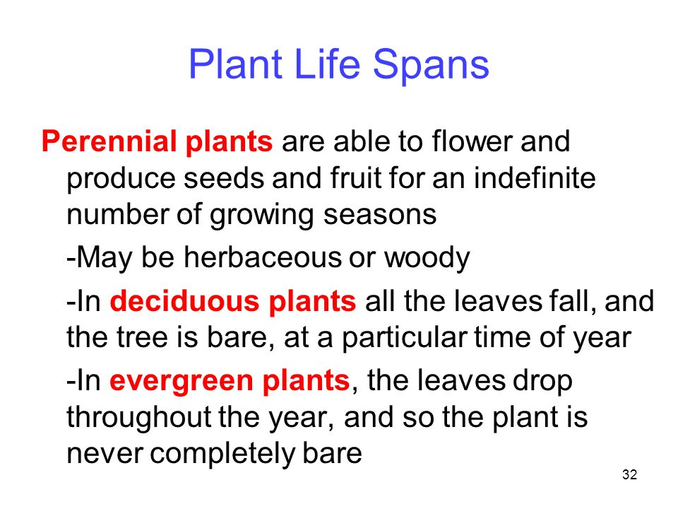 Plant Life Spans Perennial plants are able to flower and produce seeds and fruit for an indefinite number of growing seasons.