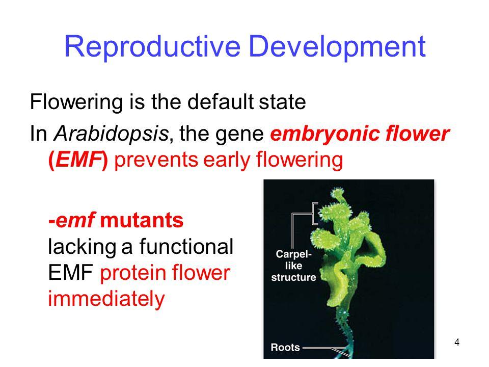 Reproductive Development