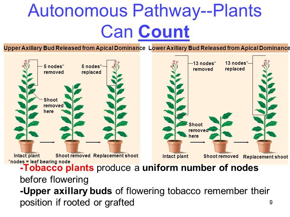 Autonomous Pathway--Plants Can Count