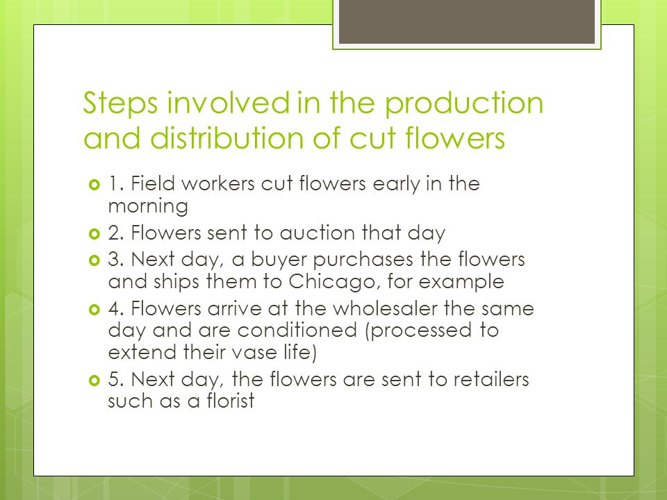 Steps involved in the production and distribution of cut flowers
