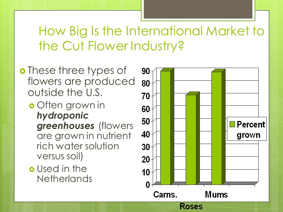 How Big Is the International Market to the Cut Flower Industry