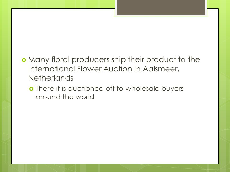 Many floral producers ship their product to the International Flower Auction in Aalsmeer, Netherlands