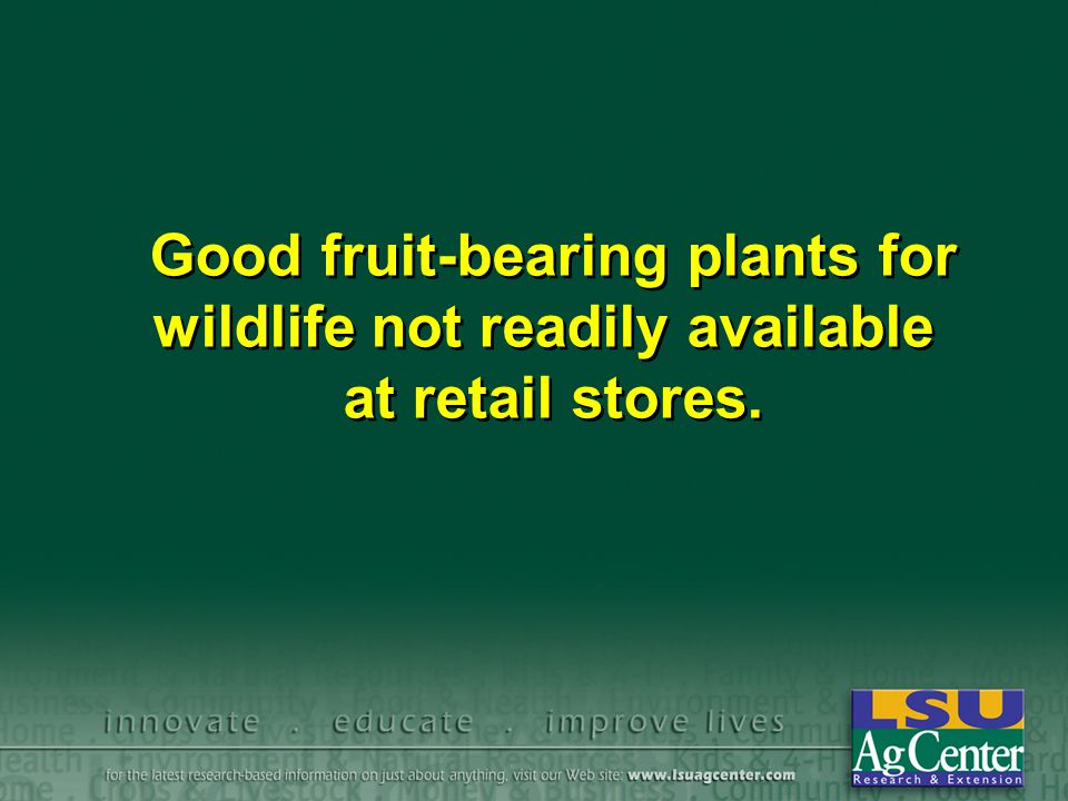 Good fruit-bearing plants for wildlife not readily available