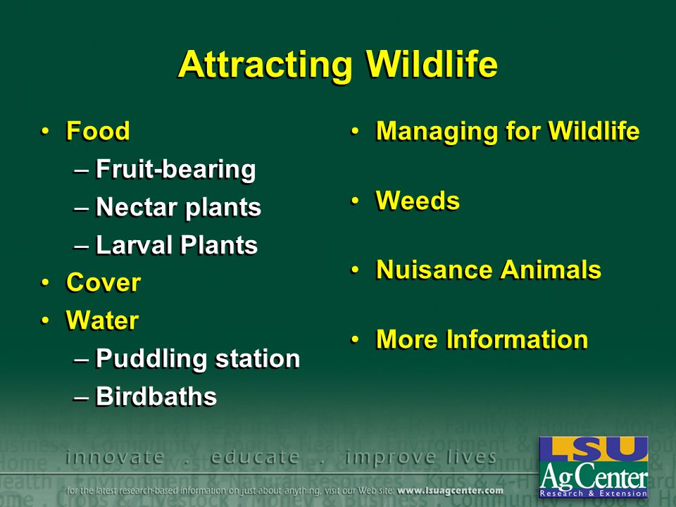 Attracting Wildlife Food Fruit-bearing Nectar plants Larval Plants
