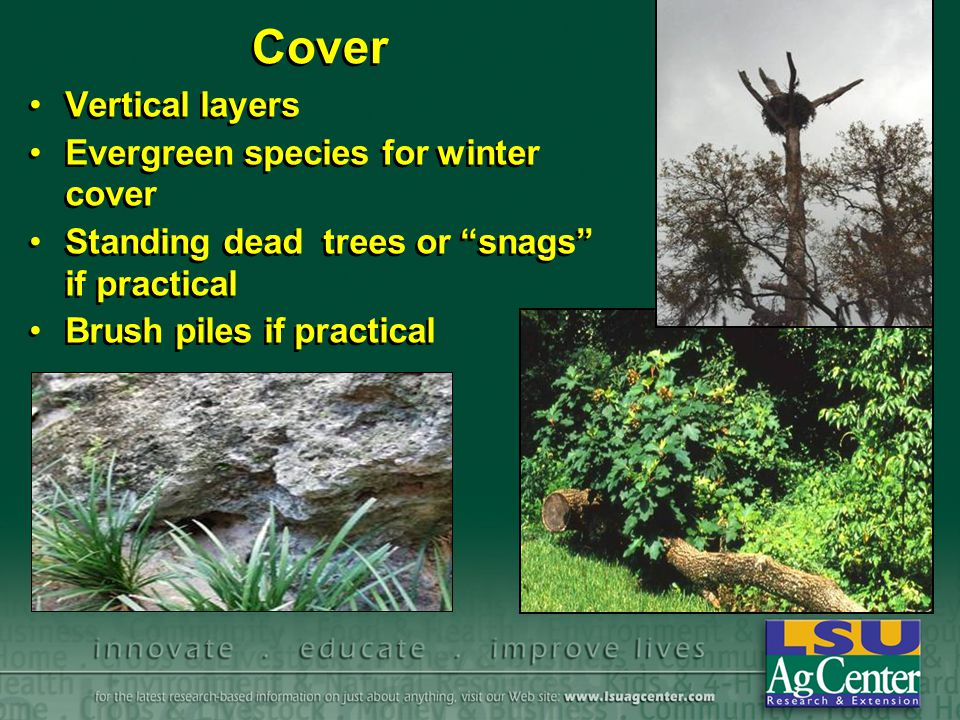 Cover Vertical layers Evergreen species for winter cover