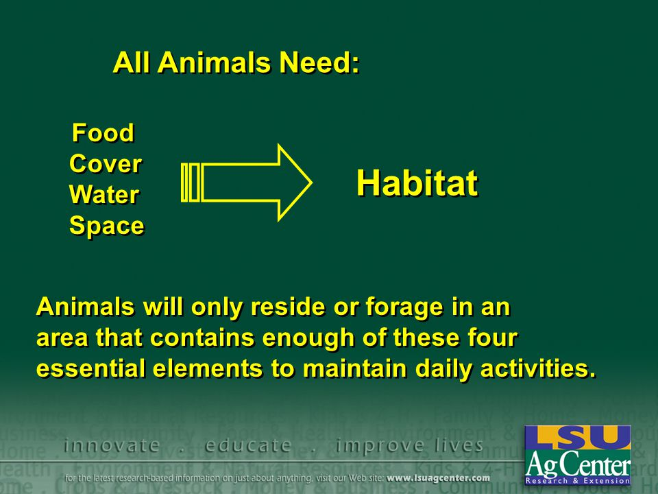 Habitat All Animals Need: Food Cover Water Space