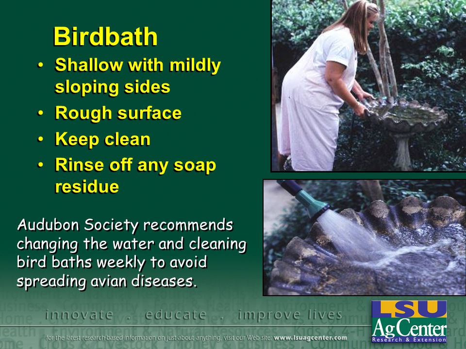 Birdbath Shallow with mildly sloping sides Rough surface Keep clean