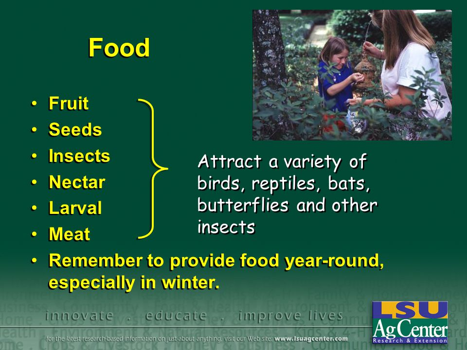 Food Fruit Seeds Insects Nectar Larval