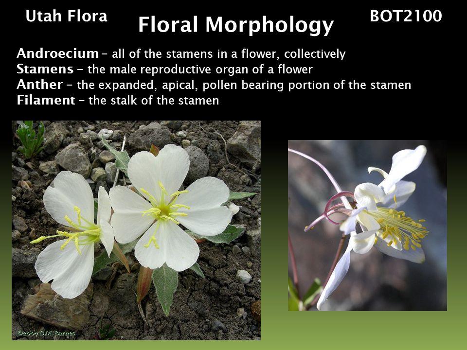 Floral Morphology Utah Flora BOT2100