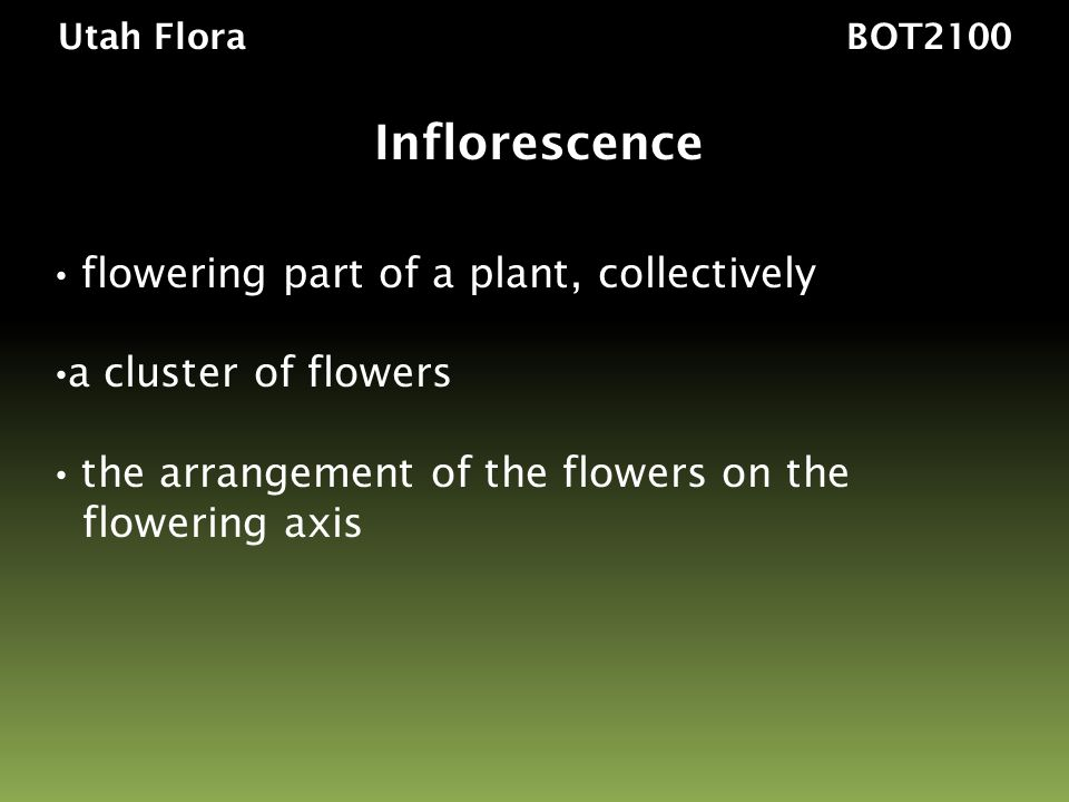 Inflorescence flowering part of a plant, collectively