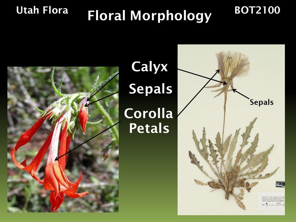 Floral Morphology Calyx Sepals Corolla Petals Utah Flora BOT2100
