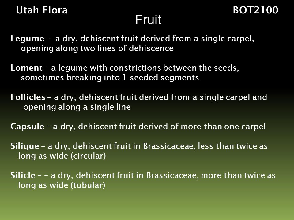 Utah Flora BOT2100 Fruit. Legume – a dry, dehiscent fruit derived from a single carpel,