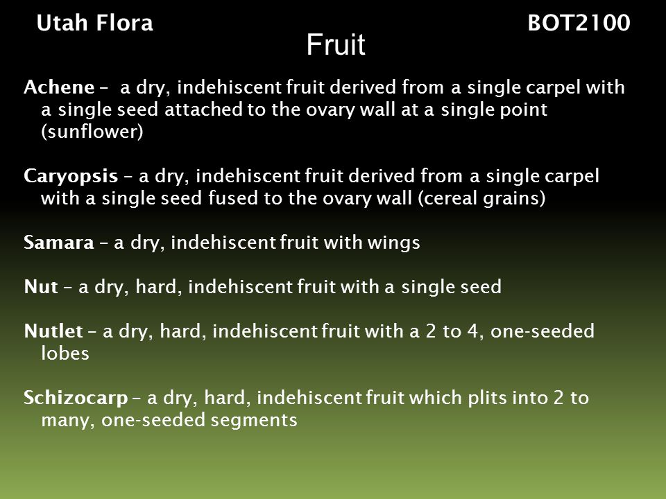 Utah Flora BOT2100 Fruit. Achene – a dry, indehiscent fruit derived from a single carpel with.