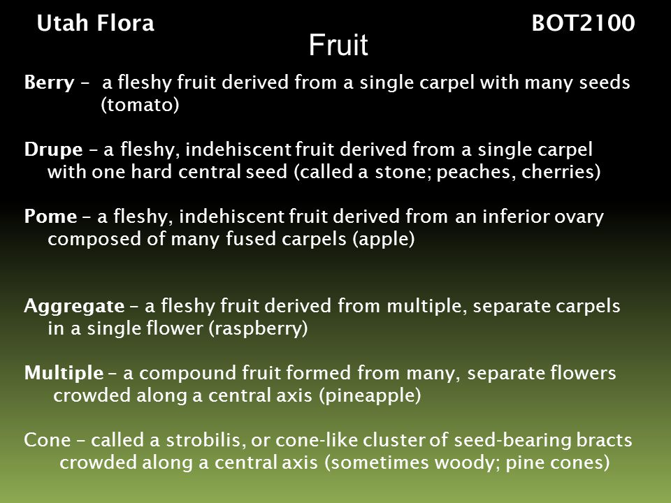 Utah Flora BOT2100 Fruit. Berry – a fleshy fruit derived from a single carpel with many seeds.