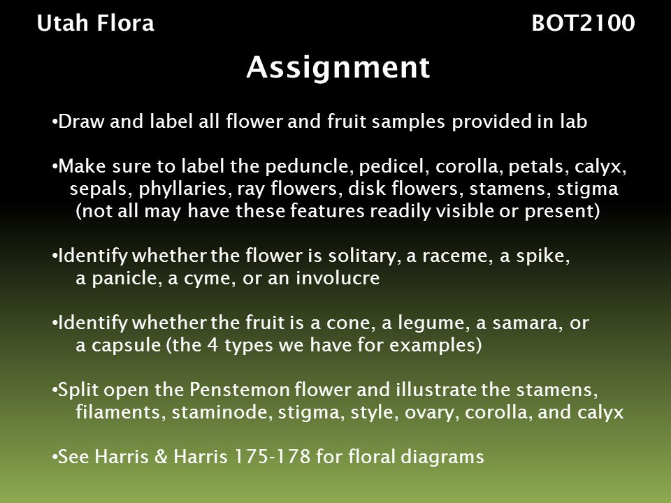 Assignment Utah Flora BOT2100