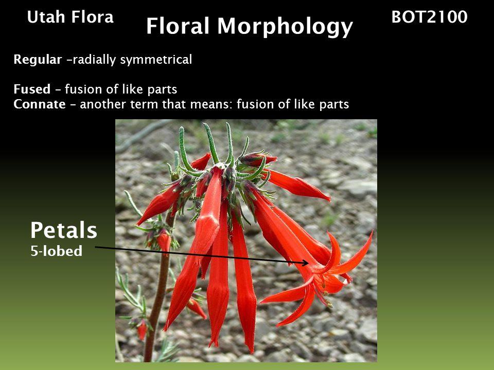 Floral Morphology Petals Utah Flora BOT2100 5-lobed