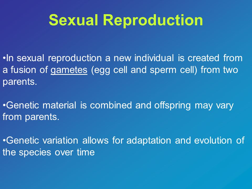 Sexual Reproduction In sexual reproduction a new individual is created from a fusion of gametes (egg cell and sperm cell) from two parents.