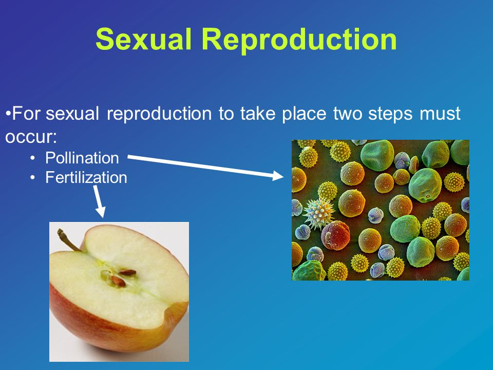 Sexual Reproduction For sexual reproduction to take place two steps must occur: Pollination.