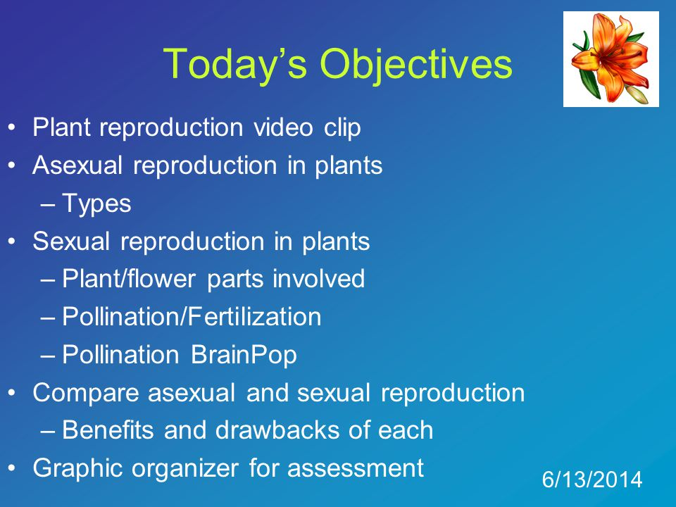 Today's Objectives Plant reproduction video clip