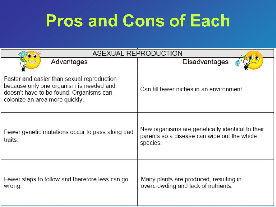 Pros and Cons of Each