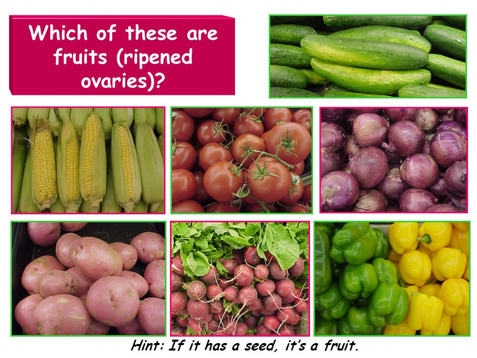 Which of these are fruits (ripened ovaries)
