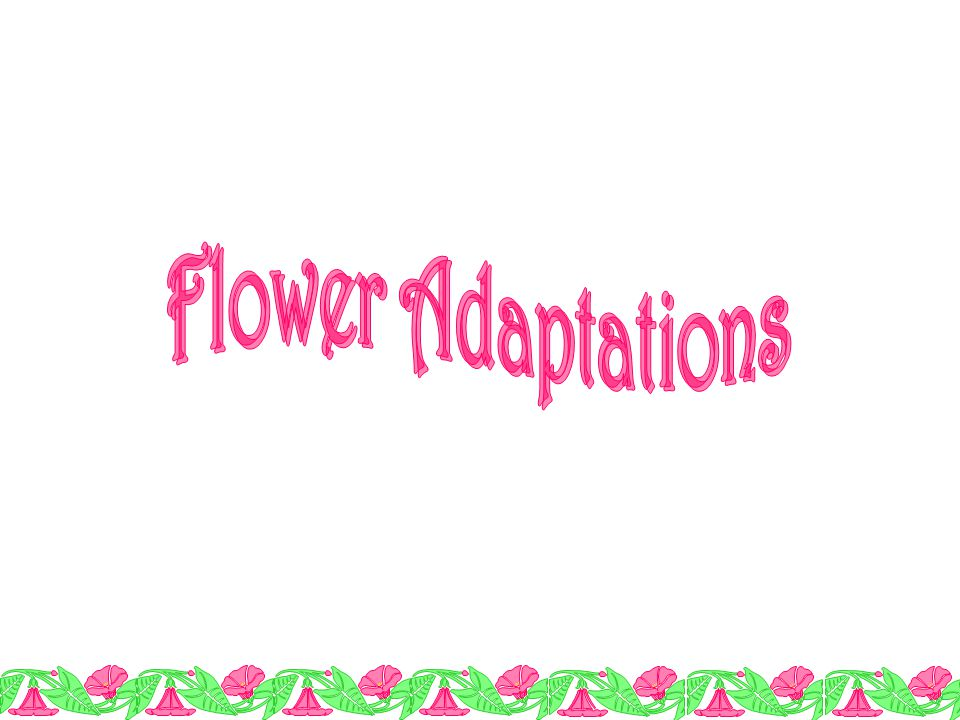 Flower Adaptations