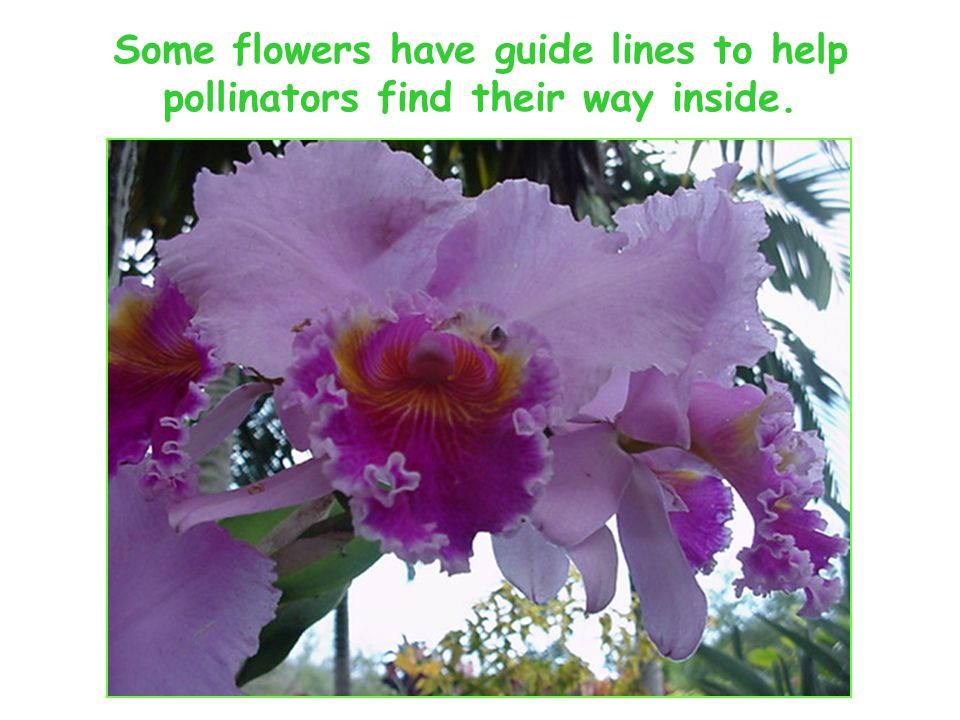 Some flowers have guide lines to help pollinators find their way inside.